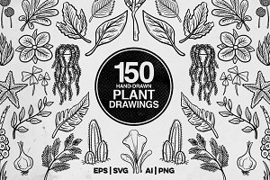 150 Plant Drawings