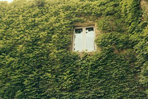 Green wall and window