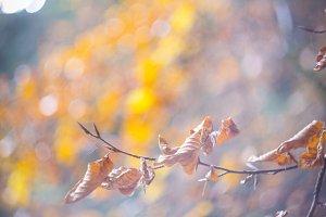 swirley bokeh colorful leaves