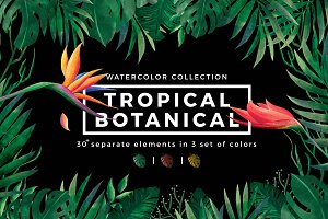 Tropical - Watercolor collection