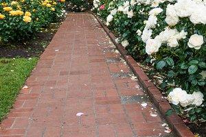 Brick pathway through a rose garden
