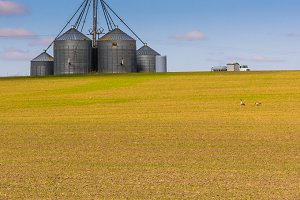 Grain storage silos in a farm field
