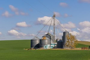 Farm with grain storage silos