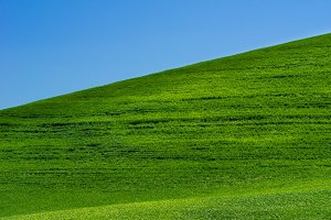 Bright green grassy field with blue