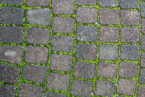 Brick pathway with green moss