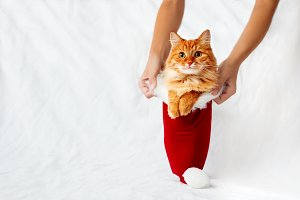 Cute ginger cat in Santa's hat