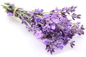 Bunch of lavender on a white