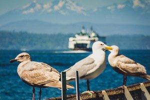 Seagulls Overlooking Elliott Bay