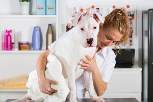 Canine hairdresser Dogo Argentine