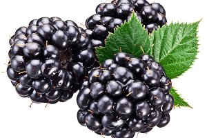Blackberries with leaves isolated