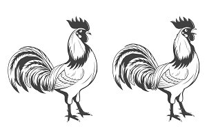 Vector monochrome rooster.