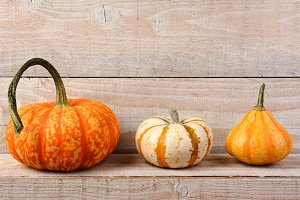 Pumpkins on Shelf Still Life