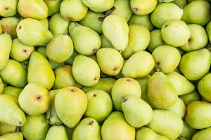 Fresh Bartlett pears on display