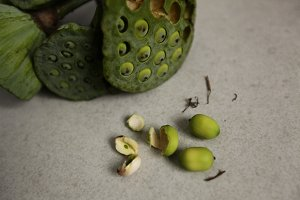 Lotus seeds on a men hand.