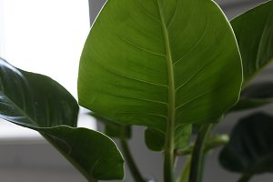 Close up of the green leaf