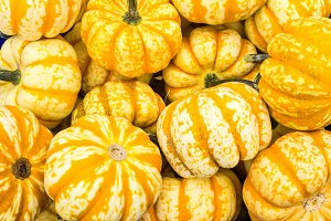 Orange winter squash on display