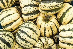 Display of harvested winter squash