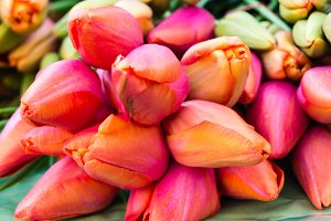 Colorful tulips on sale at market