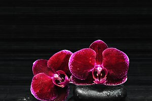 Spa concept: Orchid and stones