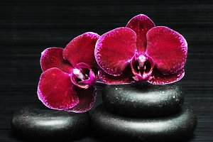 Orchid and spa stones