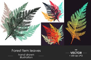 Forest Fern vector illustrations set