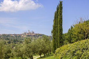 San Gimignano with vineyards