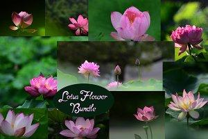 Pink Lotus Flowers Bundle