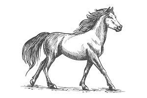 Proud white horse