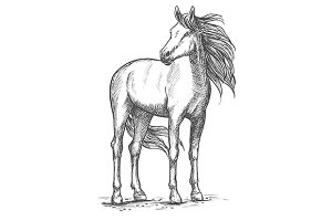 White horse sketch