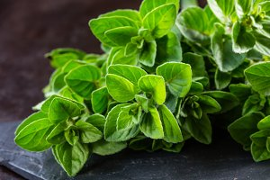 Bunch of fresh oregano on black background