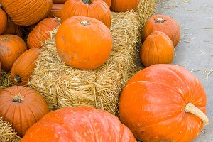 Orange pumpkins and straw