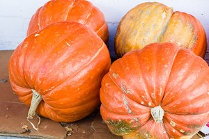 Large pumpkins or squash