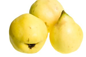 Quince fruit isolated