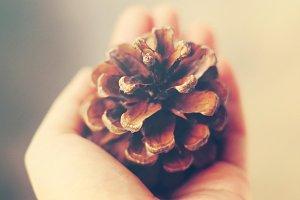 Hand holding pine cone