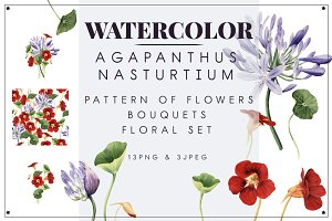 Agapanthus & Nasturtium