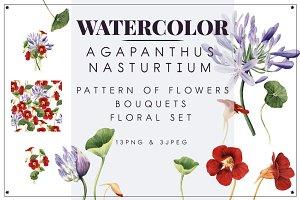 Agapanthus & Nasturtium