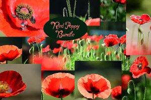 Red Poppy Bundle