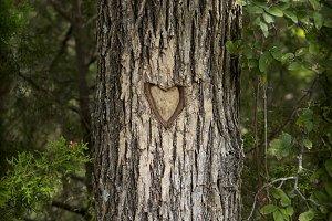 Love Knot Tree