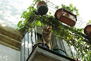 Balcony with cat