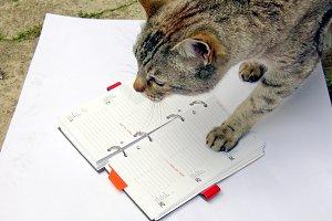 Cat reading notekeeper