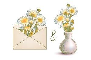 Chamomile. Envelope and vase