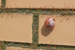 Slug snail