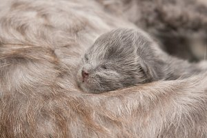 Three days old kitten