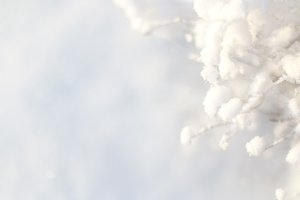 Snowy winter photo background
