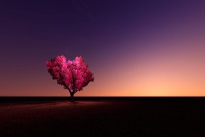 Heart tree with night sky