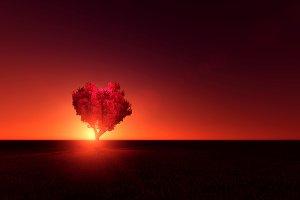 Heart tree with night sky