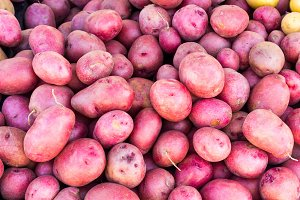 Freshly harvested red potatoes