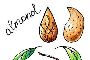 Almond hand drawn with color pencils