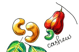 Vector isolated hand drawn cashew