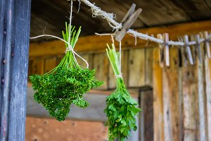 Dill and parsley hang on the background of the old wooden walls.